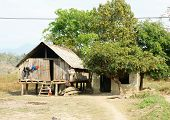 Vietnamese rural at Buon Me Thuot Daklak group of house on stilts with large green tree fresh air wooden house poor life at Vietnam countryside poster