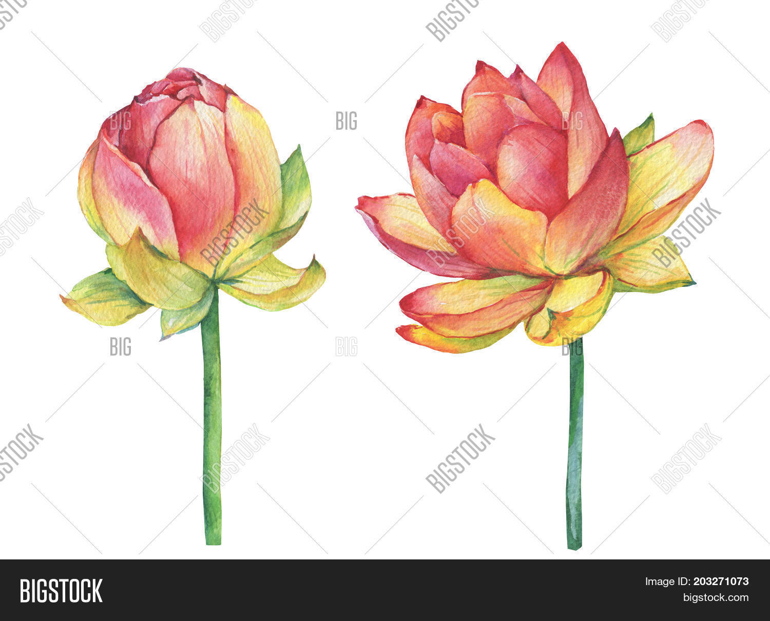 Exotic Pink Flowers Image Photo Free Trial Bigstock