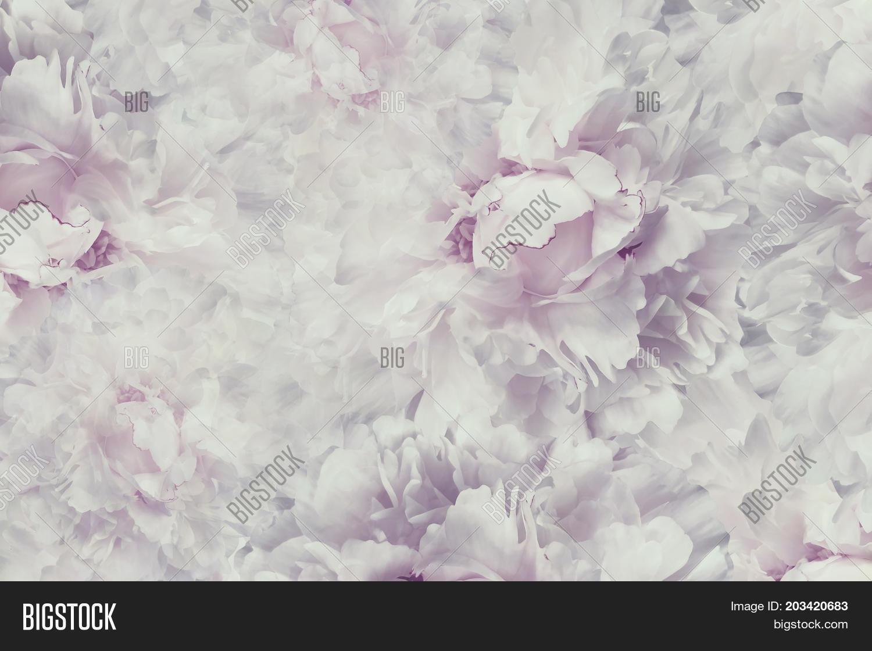 Floral Vintage Image Photo Free Trial Bigstock