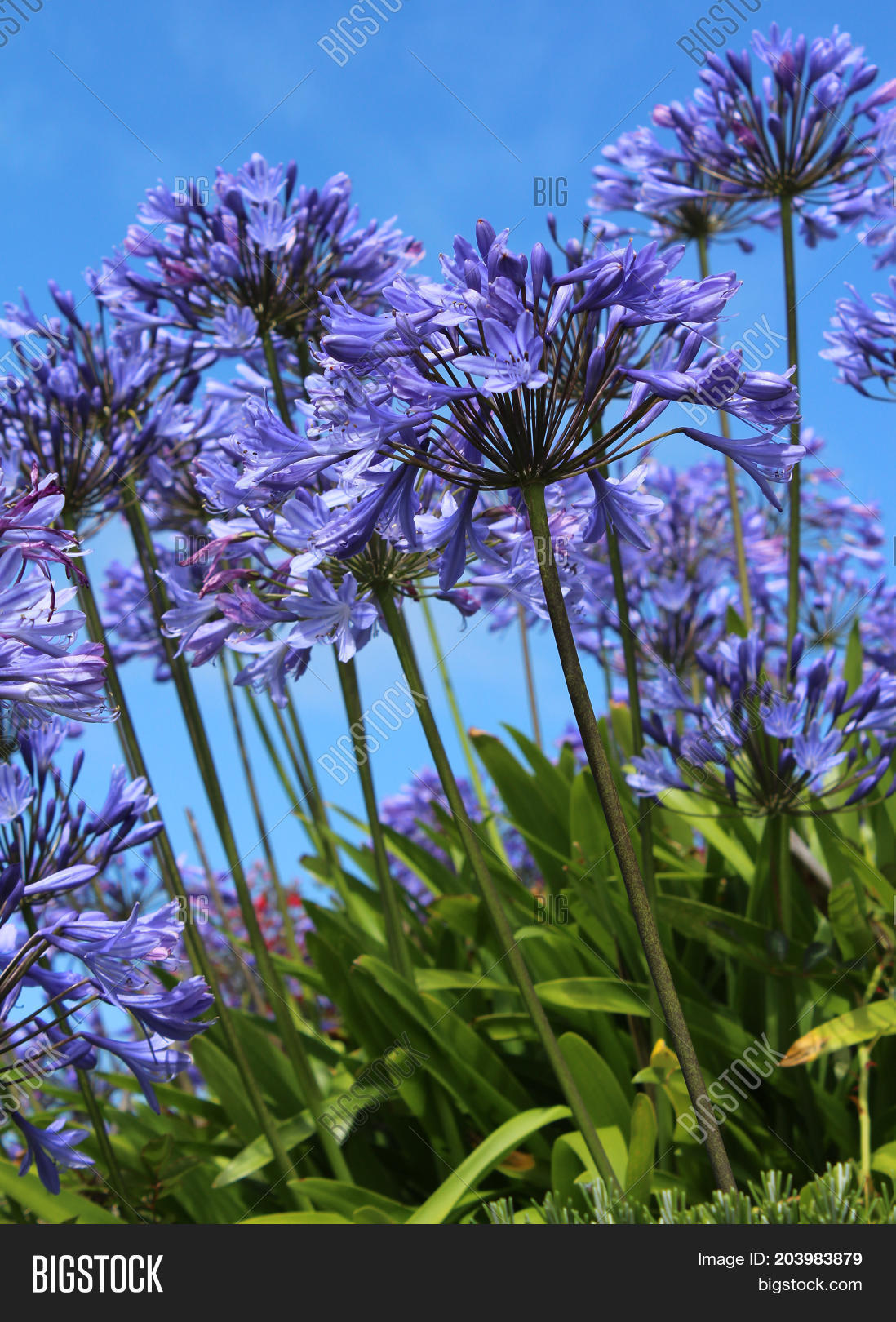 Bright Blue Flowers Image Photo Free Trial Bigstock