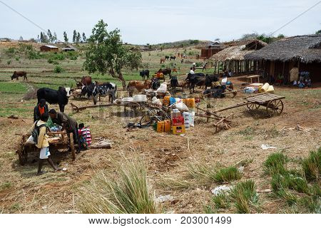 Malagasy Peoples On Farm In Rural Madagascar