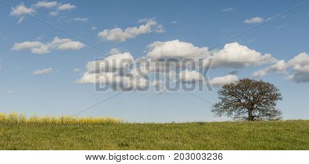 Italian landscape with meadows early in the spring. Agriculture in Italy fields pastures and solitary tree