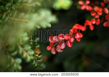 Autumn green and red leaves background in autumn park. Season change concept, nature welcoming autumn