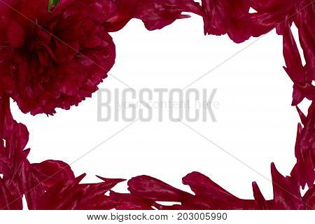 Frame With Peony Petals