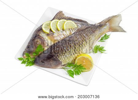 Common carp and mirror carp with peeled scales and prepared for cooking lemon slices and parsley twigs on the white square dish on a white background