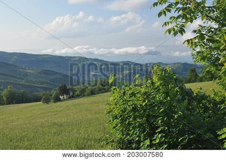 Hills and fields with loose buildings during sunset in northern Tuscany Italy.