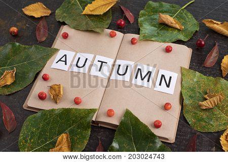 Autumn composition with leaves, apples, an old empty book and a sign Autumn in it.