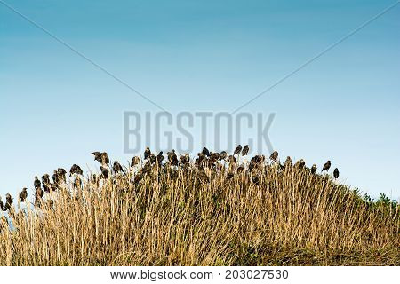 Flock Of Birds Nesting In A Nature Reserve Before Migration