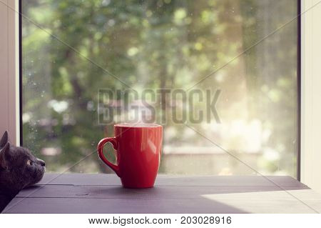 cat looking at the steaming drink in a red mug on a table against the window/ warm sunny home atmosphere