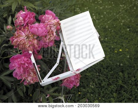 Music stand with blank music sheets next to the beautiful peonies in the garden