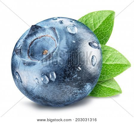Blueberry with leaves and dewdrops. Macro shot. File contains clipping path.