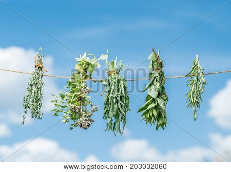 Bundles of flavoured herbs drying on the open air. Sky background.