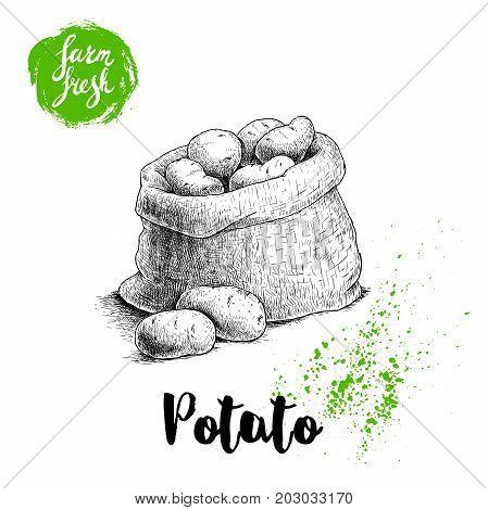 Hand drawn sketch style illustration of ripe potatoes in burlap bag. Farm fresh vector illustration poster.