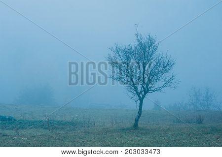 alone naked tree