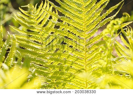 Yellow grass in the sun. The colorful natural background abstract