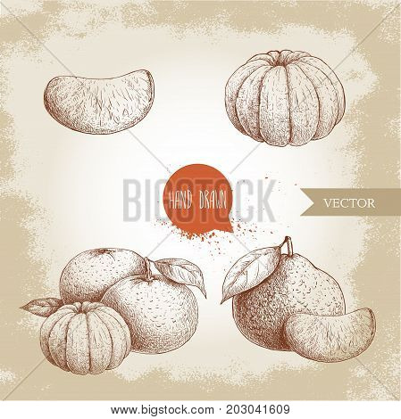 Hand drawn sketch set od mandarins whole and peeled. Vintage style illustration of tangerine with leafs an slices. Eco food vector artwork.