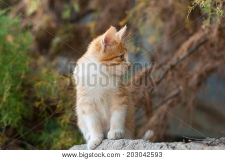 Outdoor portrait of playful red haired kitty