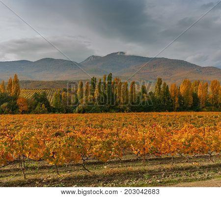 Mountain landscape with vineyards and rainy skies at fall season on Crimean peninsula