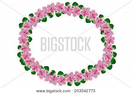 Bright azalea flowers isolated on white background.
