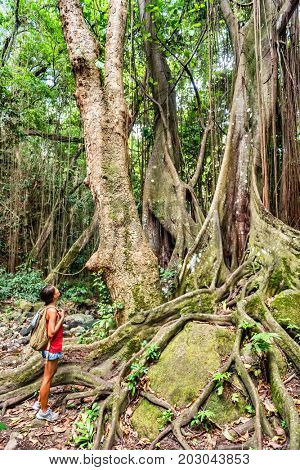 Caribbean cruise ship excursion in tropical forest woman hiking in St Kitts island, tropical travel vacation destination. Girl walking on guided tour learning on nature with guide.