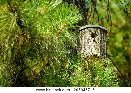a birdhouse on a pine in a bright summer day