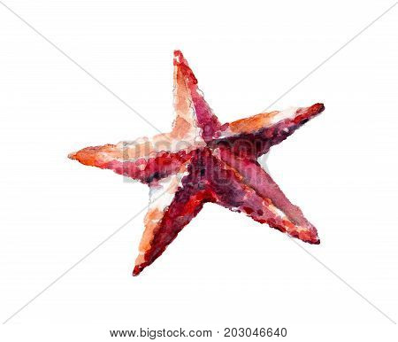 Watercolor illustration hand drawn sea star isolated object on white background.