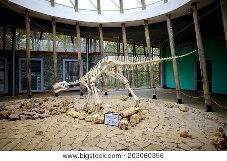 Tskaltubo, Georgia - November 18, 2016: Skeleton Of Dinosaur, Located In Sataplia Nature Reserve Nea