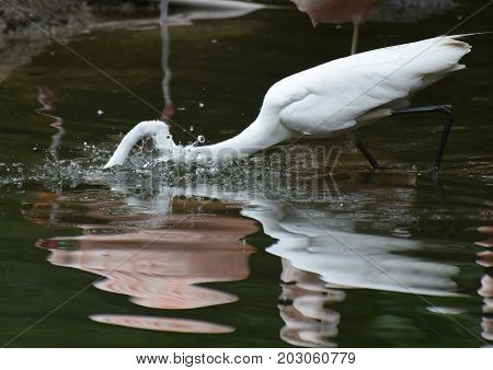 Amazing Image of a Heron Snagging Food
