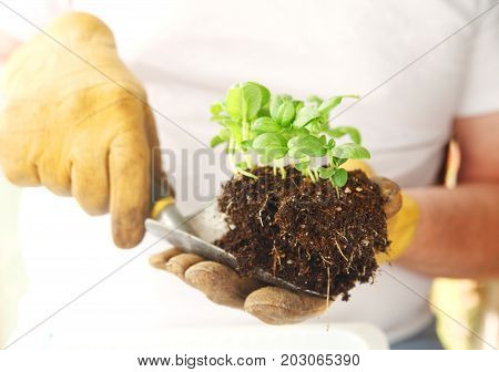 A man with work gloves holds a trowel with a clump of basil seedlings ready to transplant