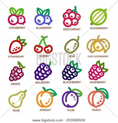 fruit thin line icon set vector illustration