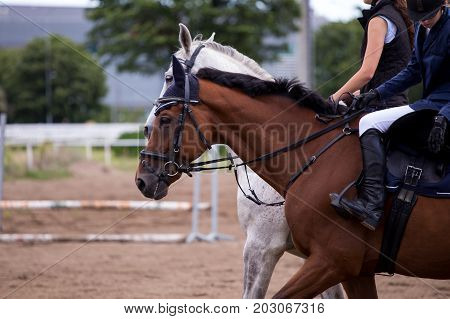Rider On A Horse Galloping Across
