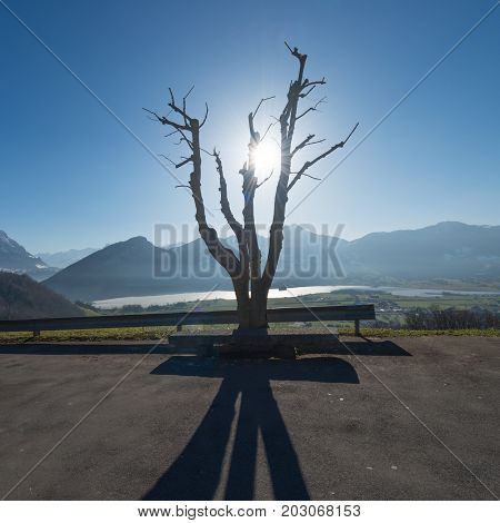 An old tree in the backlight. Light and shadow. In the background a mountain ridge.