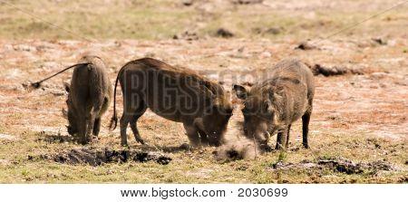 Warthogs Diggin' It