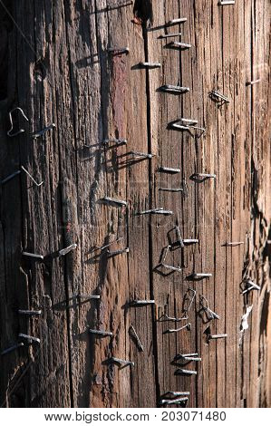 Telephone pole covered with staples from community notices.