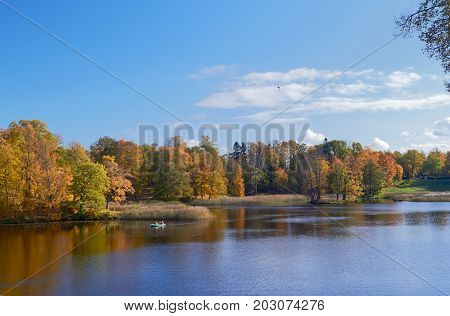 Autumn colorful landscape with falling leaves. October bright day in Pavlovsk Park, St.Petersburg, Russia