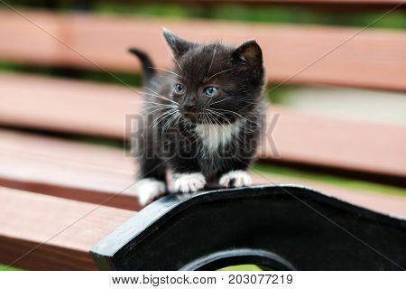 adorable kitten posing on a bench outdoors