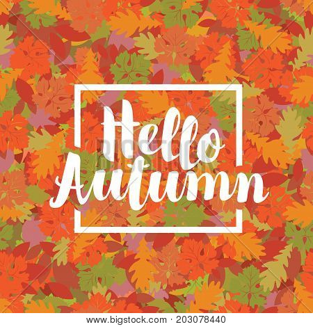 Vector calligraphic inscription Hello Autumn in the frame on the background of seamless texture of colored autumn leaves. Can be used for flyers banners or posters.
