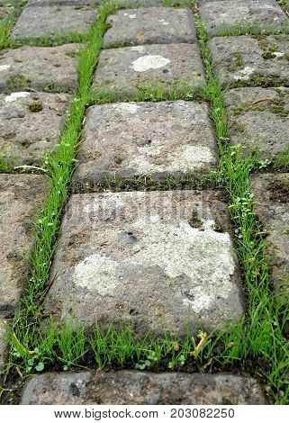 Grass In Between Square Stone Cobbles - Straight