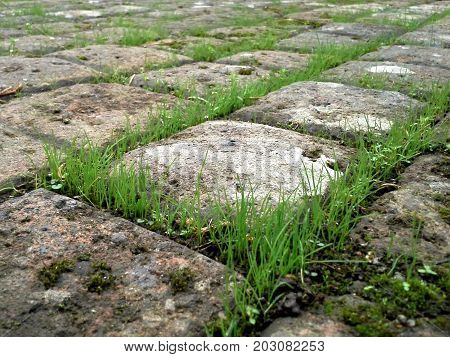 Grass In Between Square Stone Cobbles - Diagonal