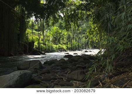 Jungle leafs and palmtrees along the river in Ubud, Bali, Indonesia