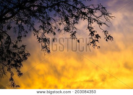 Branch Of Tree Silhouetted On The Beautiful Motion On Cloud During The Sunset Lighting.