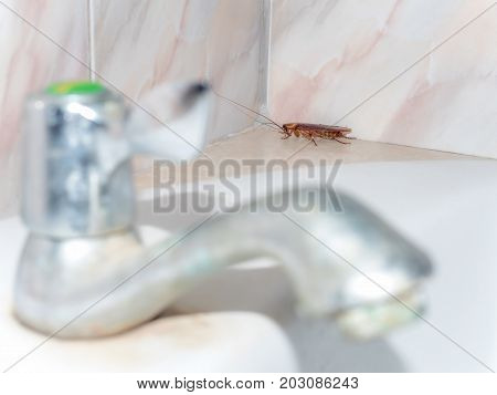Close-up image of cockroach hiding in corner in house on background of water closet.