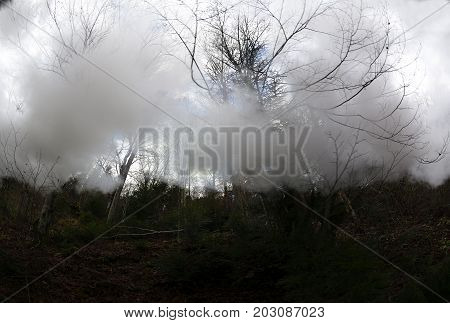 fog in the forest. Dark autumn forest with trail in fog. Fall woods. Enchanted autumn forest in fog in the evening.