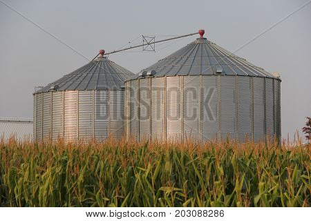 Two granaries stand in a corn field