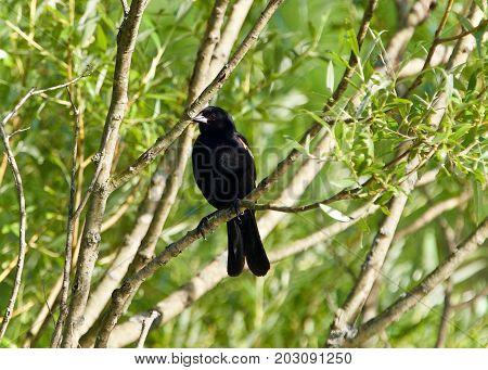 Beautiful Background With A Blackbird Sitting