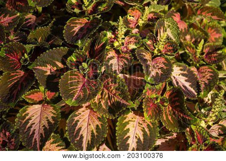Photo of a several leaves with several colours and sunlight