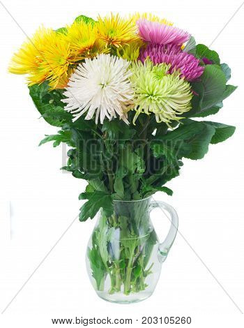 Chrisantemum fresh fall flowers bouquet in vase isolated on white background