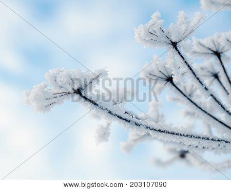 Winter landscape. Winter scene . Frozenned flower