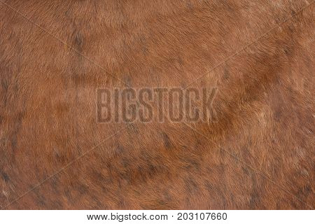 Brown skin texture.Fur of an animal's fur.