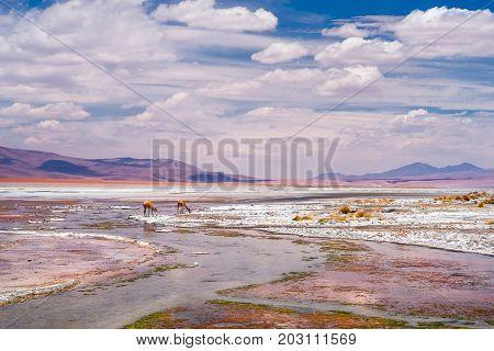 The Salar de Uyuni is the largest salt flat in the world.